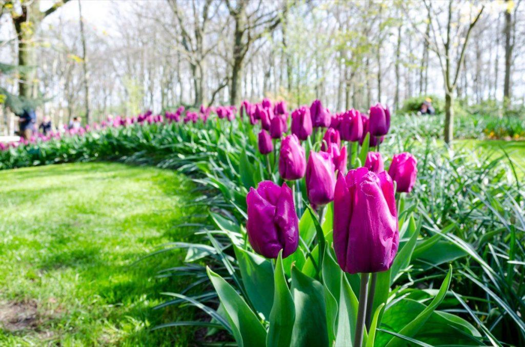 jardin botanique-40 idées irrésistibles de premier rendez-vous - 40 et plus